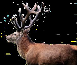 なんで鹿は角が生えているのか?...